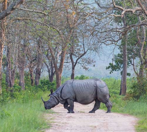 KAZIRANGA 04 NIGHTS 05 DAYS