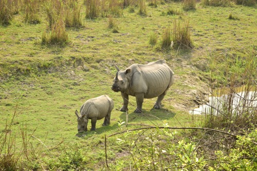 07 DAYS Nameri & Kaziranga